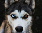 Arhlex's Profile Picture