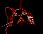 Kitcat's Profile Picture