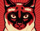 ShuffleCat's Profile Picture