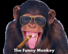 The Funny Monkey's Profile Picture