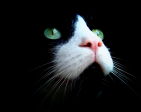 TUXTHEH1CK's Profile Picture