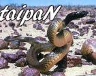 taipaN's Profile Picture